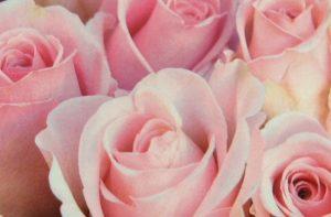 rosen1a
